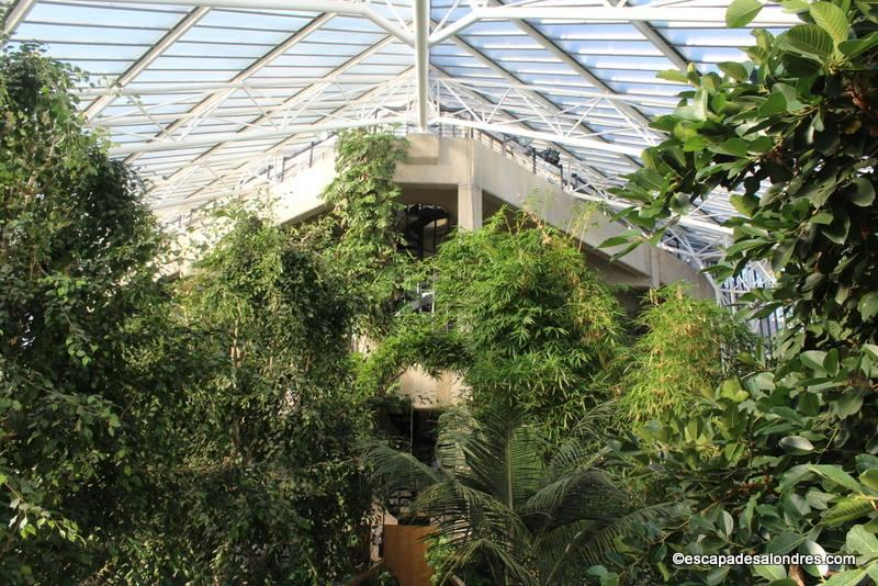 Barbican Conservatory London