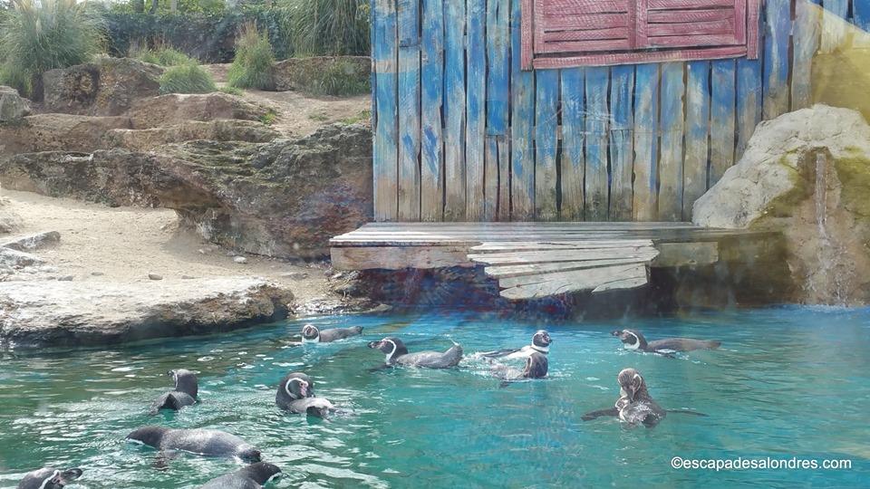 Chessington world aquarium
