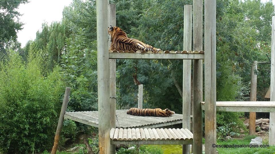 Chessington world zoo