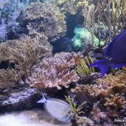 Sea life london aquarium 09 n 1